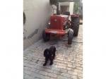 pets-in-village